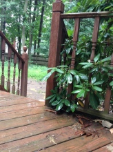 Rain on the deck